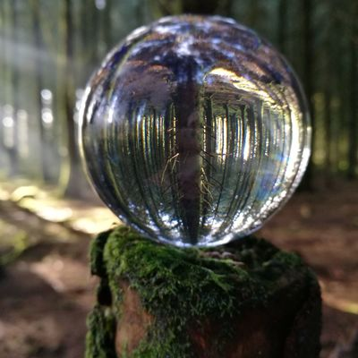 the bubble of trees #trees And Light Focus On Foreground Bubble Tree Outdoors