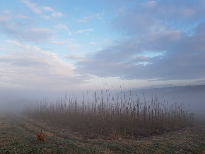 Nebel Dog Fog