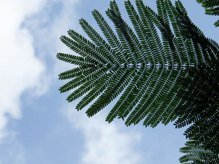 Symmetry Tree