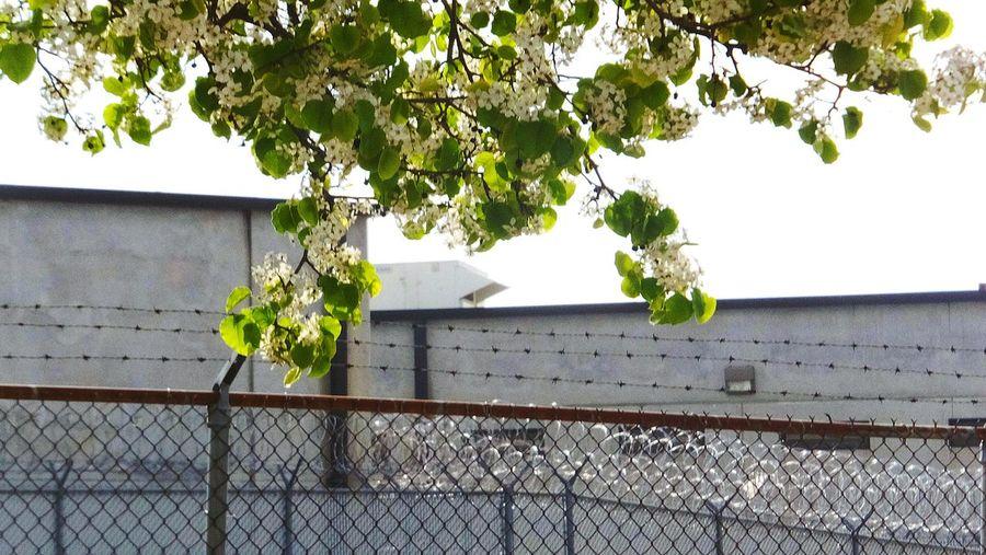 Sprung Georgia Walton County Jail Bloom Spring Springtime Flowers Urban Spring Fever Nature