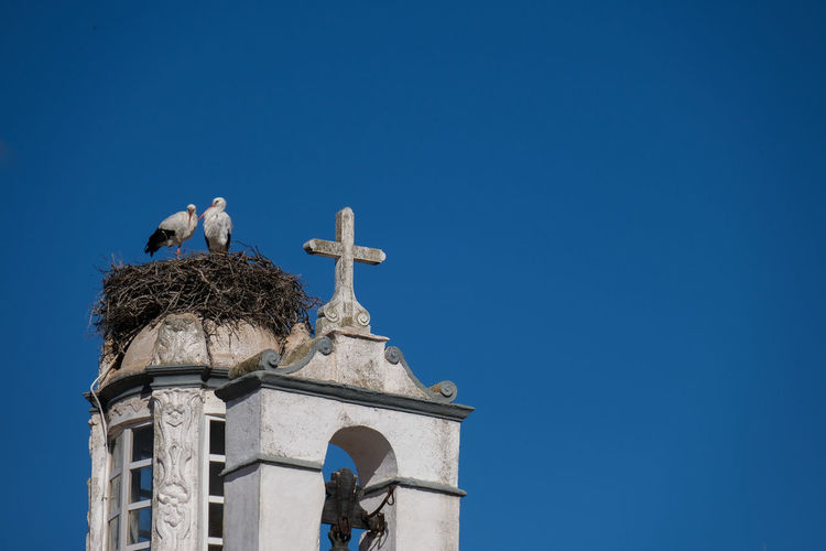 Low angle view of bird storck on a building