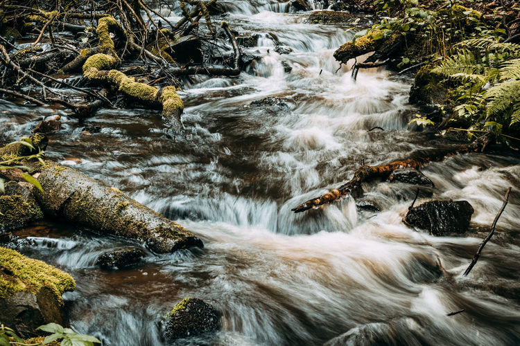 Forsakar in Degeberga, southern Sweden Creek EyeEm EyeEm Nature Lover EyeEm Gallery EyeEmNewHere The Week On Eyem Beauty In Nature Blurred Motion Day Eye4photography  Forest Forest Creek Long Exposure Motion Nature No People Outdoors River Water Waterfall