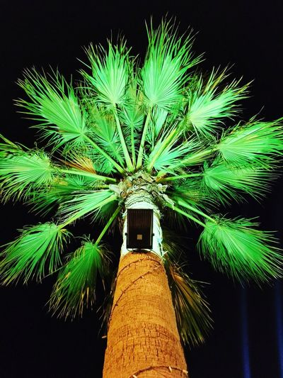 The Palm Low Angle View Green Color Tree Architecture Night No People Growth Built Structure Outdoors Close-up Illuminated Sky Nature