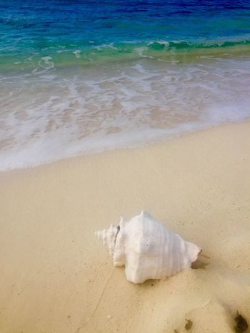 Tranquility Waves Ocean Seaside Conch Seashell Sea Beach Water Land Sand Nature Beauty In Nature No People Wave Day Outdoors