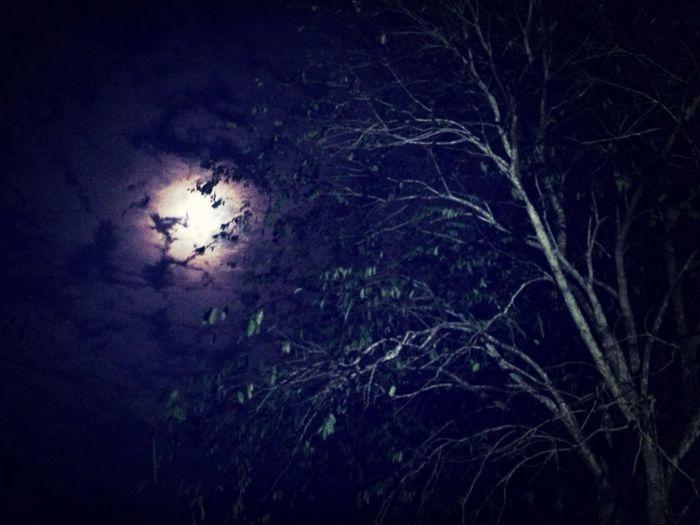 Đêm trăng sáng, rượu đã la đà!