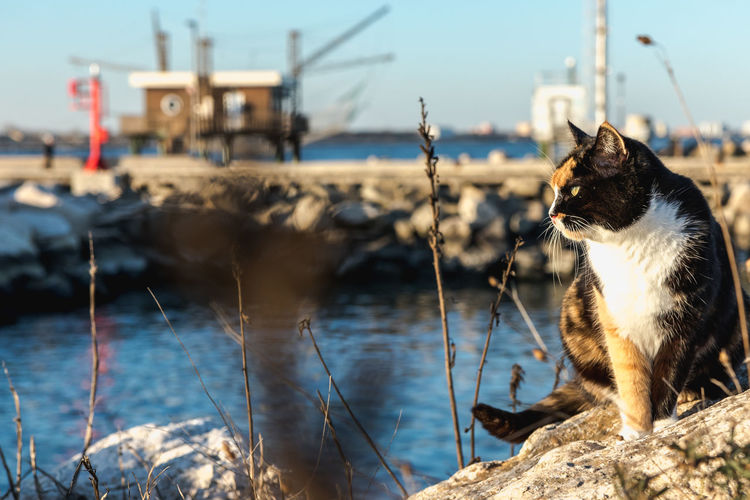 Cat sitting on a boat