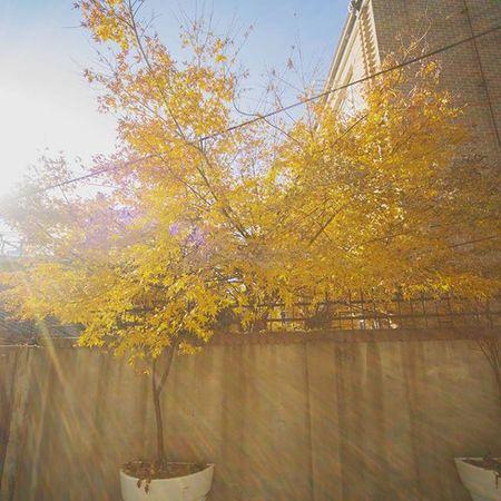 북촌한옥마을 걷는데 아직 무리하면 안될거같다는걸 깨달았다 여행 일상 나무 햇빛 풍경 니콘D610 Nikond610 Photographer_suhyeon