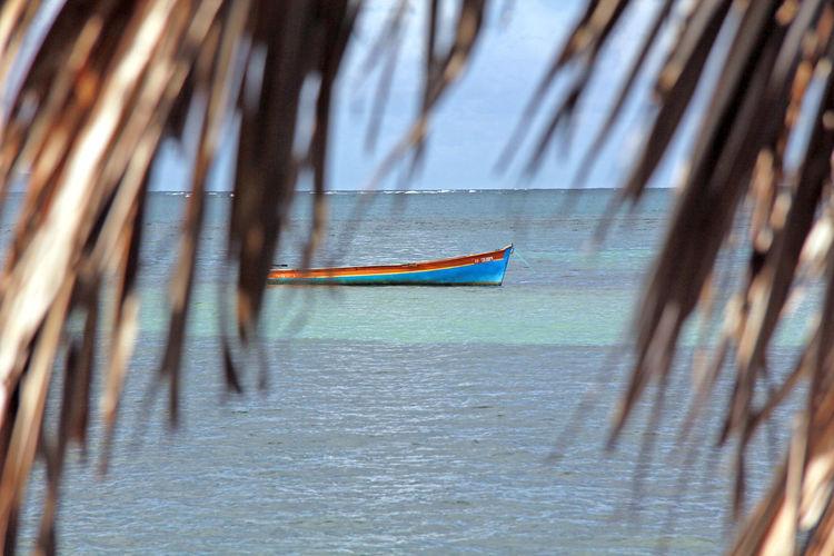 Martinique Martinique🏝 Boat Boat In Island