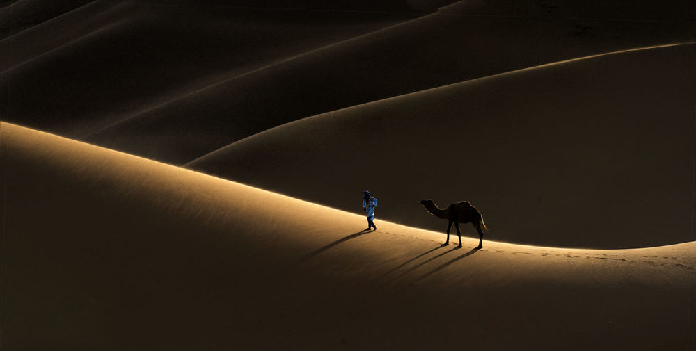 High angle view of camel and man on sand dune