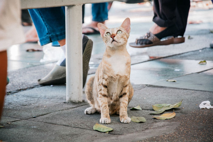 what you see that ? Bangkok Littlecat  Thailand Animal Cat Catonstreet Kitty Cat Pet Yellowcat