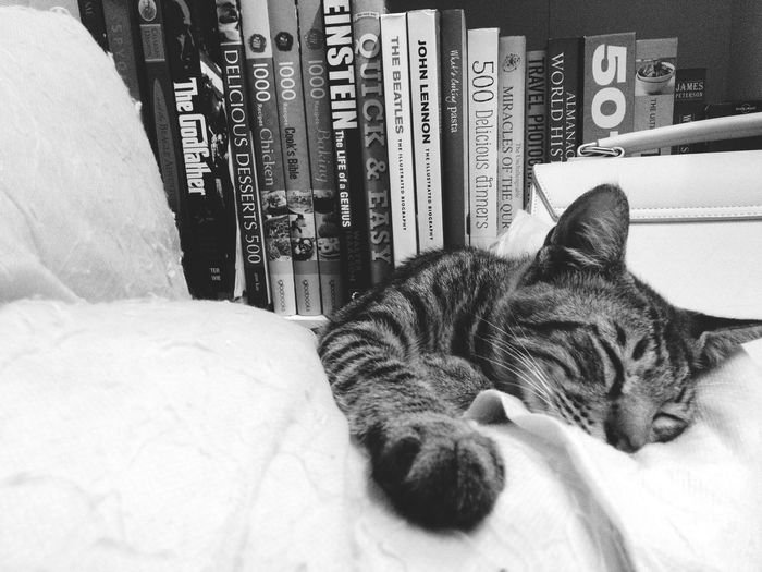 Sleep everywhere, anywhere, anytime 😴 Blackandwhite Bnw Cat Sleeping Cat Zenfone Photography Not The Best Shot Need To Sleep Need Help Cats 🐱 Monochrome EyeEm