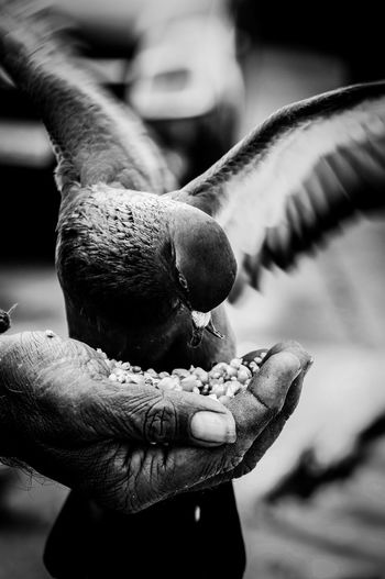 The Life with Wings Food Pigeon Canon Blackandwhite Human Hand Holding Close-up Spread Wings Wildlife Bird Flapping Moments Of Happiness