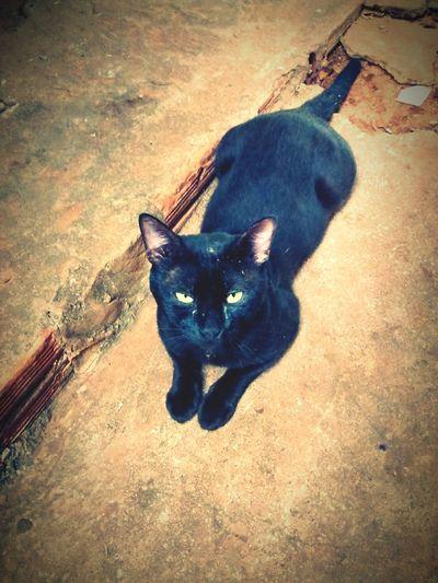 BLackCat Cat HDR Moto G Animal Motog
