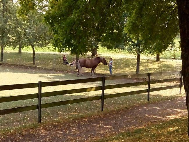 Friburgo Caballo Horse