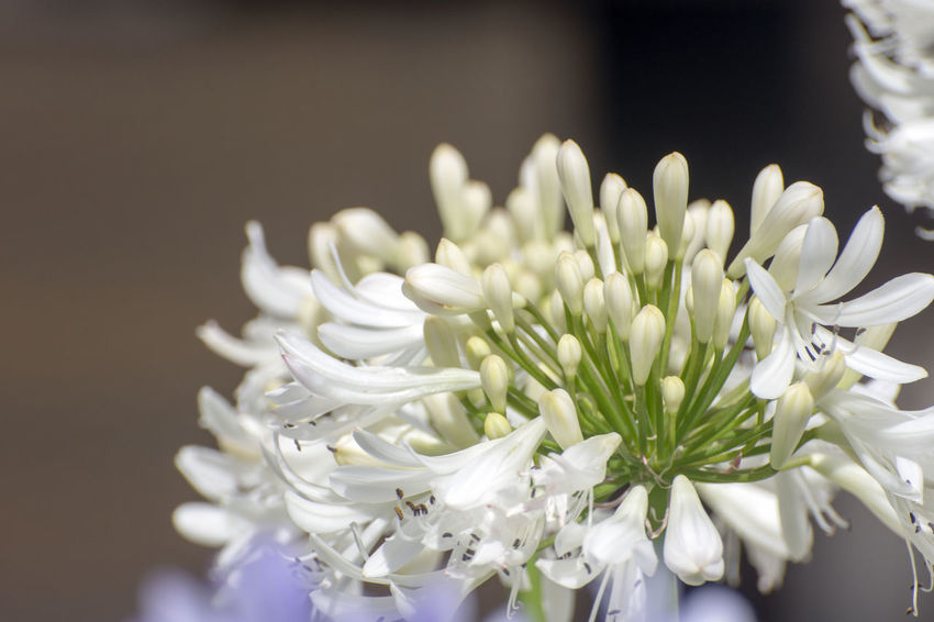 The flowers. Flowering Plant Flower Fragility Vulnerability  Plant Beauty In Nature Freshness Petal Close-up Flower Head Inflorescence White Color Nature Growth Indoors  No People Selective Focus Studio Shot Focus On Foreground White Flower Arrangement Bouquet Bunch Of Flowers EyeEmNewHere EyeEm Selects