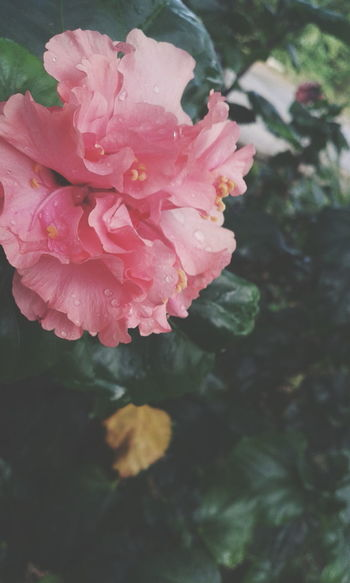Pastel Power Taking Photos Hi! That's Me Check This Out Enjoying Life Hanging Out Hello World Cheese! Mexico Instamexico Relaxing Vscocam Photograph First Eyeem Photo Flowers