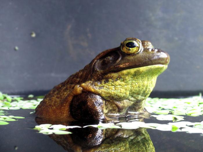 Frog Amphibian