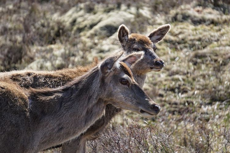 Side view of deers on land