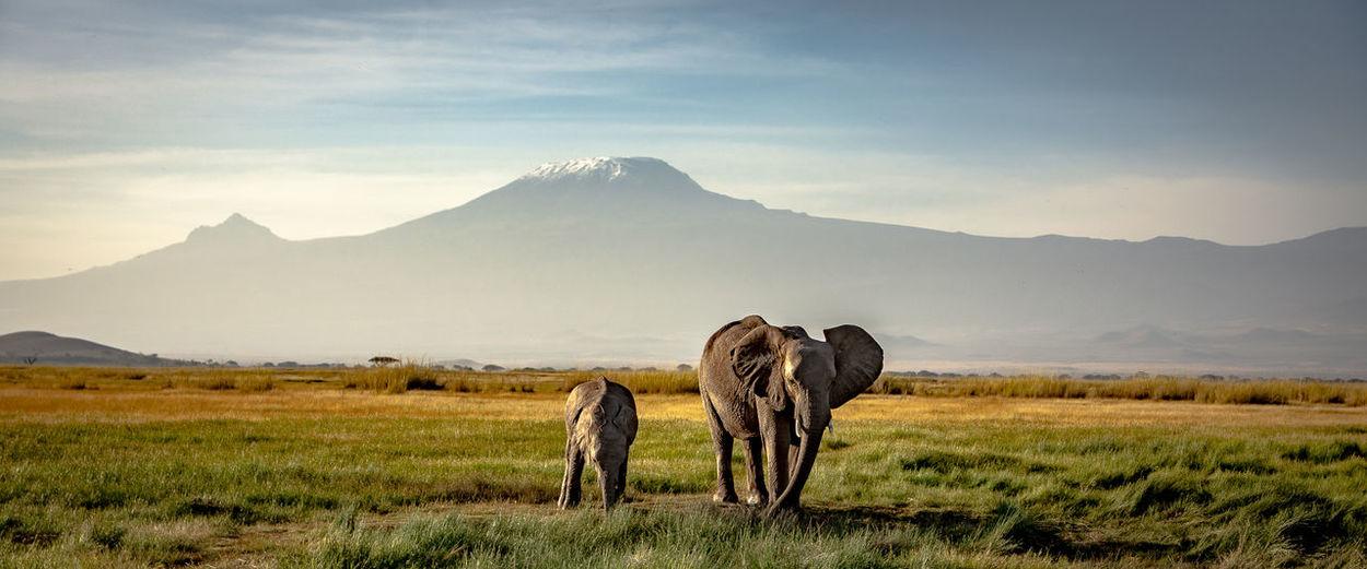 Elephants on land