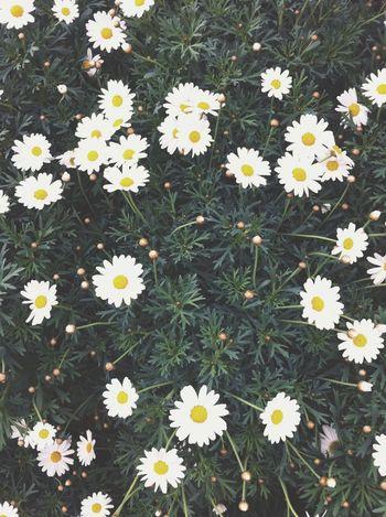 Spring Flowers Flower