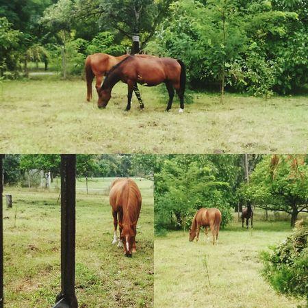 Animalplanet Animallife Horse Farmlife Summertime Summer2015 Ópusztaszer Lo Nature