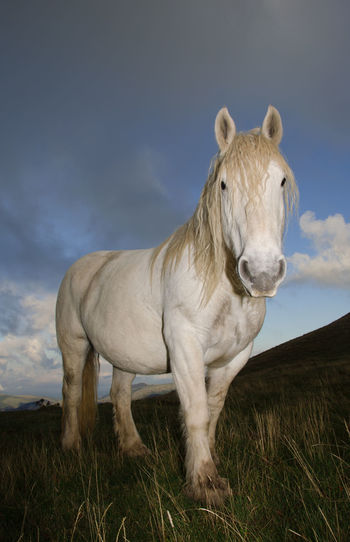 Portrait of white horse stallion against the grey cloud Stallion White Horse Wild Animal Animal Themes Animal Wildlife Beauty Beauty In Nature Cloud - Sky Clouds Equestrian Equine Field Horse Land Landscape Livestock Mammal Mane Monte Cucco Mountain Nature Storm Cloud Umbria Vertebrate Wild Horses