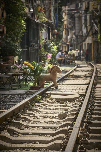 High angle view of cat on railroad tracks