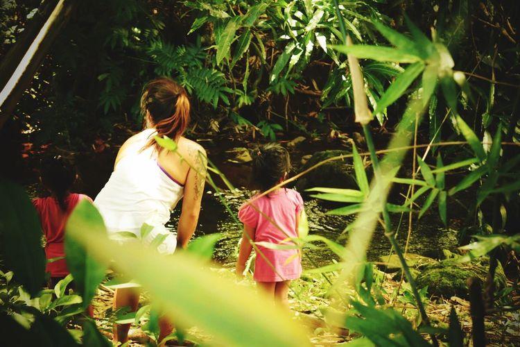 Live For The Story Lifestyles Outdoors Nature Backyardstreams River Peaceful BigIslandHilo Hawaii