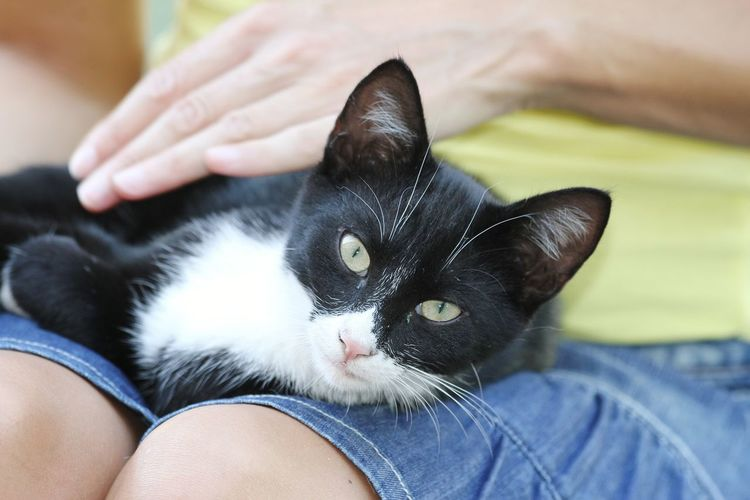 Midsection of woman with cat on lap