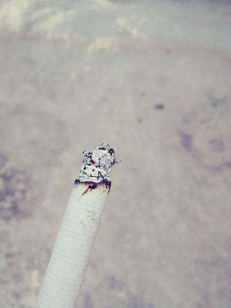 Smoking Smoke Cigarette  Cıgarettes Tabacco  No People