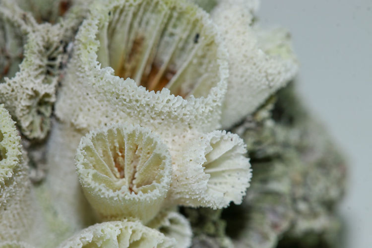 petrified coral Petrified Coral Coral White Textured  Texture Plant Sea Life Flower Head Close-up Plant UnderSea Underwater Soft Coral