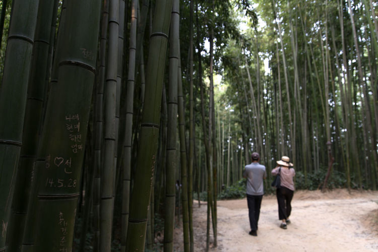 Juknokwon, the famous bamboo park in Damyang, Jeonnam, South Korea Damyang Juknokwon Adult Bamboo - Plant Bamboo Grove Bamboo Park Day Forest Full Length Leisure Activity Lifestyles Men Nature Outdoors People Real People Rear View Senior Couple Togetherness Tree Two People Walking Women