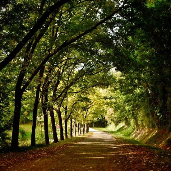 Et au bout, la lumière... #instameetmarais2013 #maraispoitevin #deuxsevres #niort #igersniort #igersfrance Niort Igersfrance Tree_captures Deuxsevres Igersniort Instameetmarais2013 Maraispoitevin