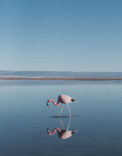 View of birds in sea against sky