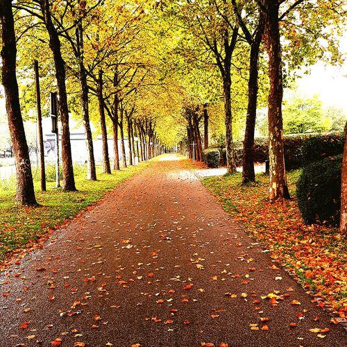 Herbst😍 Autumn