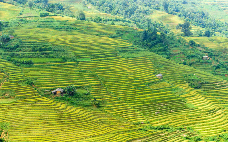 Rice terraces at YTy near sapa, LaoCai, VietNam Farm Field Agriculture Farm Field Growth Horticulture Landscape Laocai Terrace Malaysia Terraces Mountain Mucangchai Terrace, Mucangchai Vietnam Myanmar Terraces Nature Philippines Terraces Plant Rice - Cereal Plant Rice Paddy Sapa Terraces Terraced Field Travel Valley Vietnam Terraces Vietnamphotography Yty Near Sapa