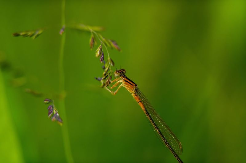 Macro Animal Themes Animal Animal Wildlife Insect Animals In The Wild Close-up Plant Nature No People Beauty In Nature Focus On Foreground Day Green Color
