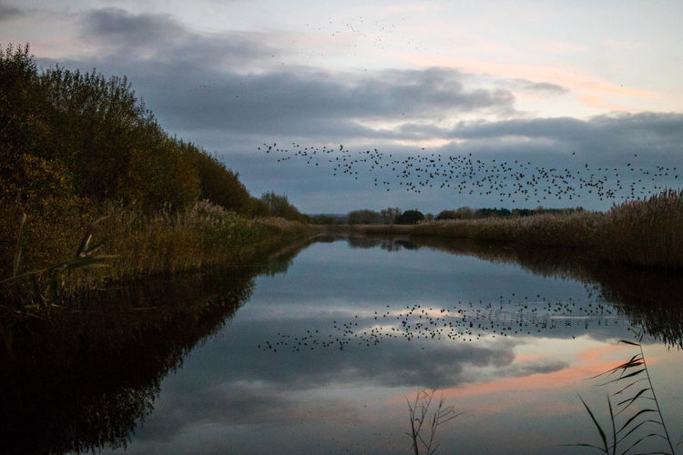 Reflection Water Nature Sky Sunset Lake No People Outdoors Tree Beauty In Nature Day Somerset Murmuration Of Starlings Flock Of Birds