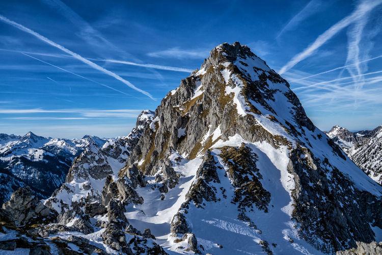 Gimpel in winter