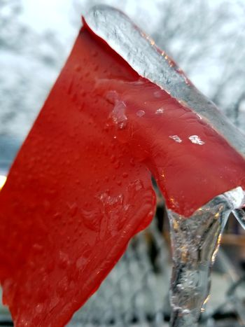 Red Vibrant Color Close-up No People Day Outdoors Ice Flag