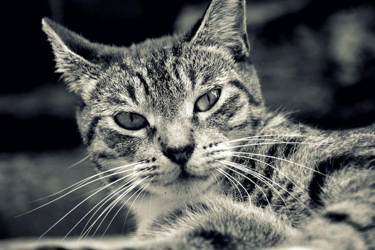 Animal Animals Cat Cats Fionna New Caledonia