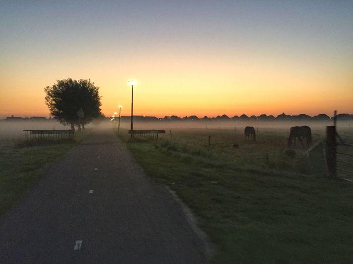 Early mornings... Sunrise Nature LandscapeTranquil Scene Tree
