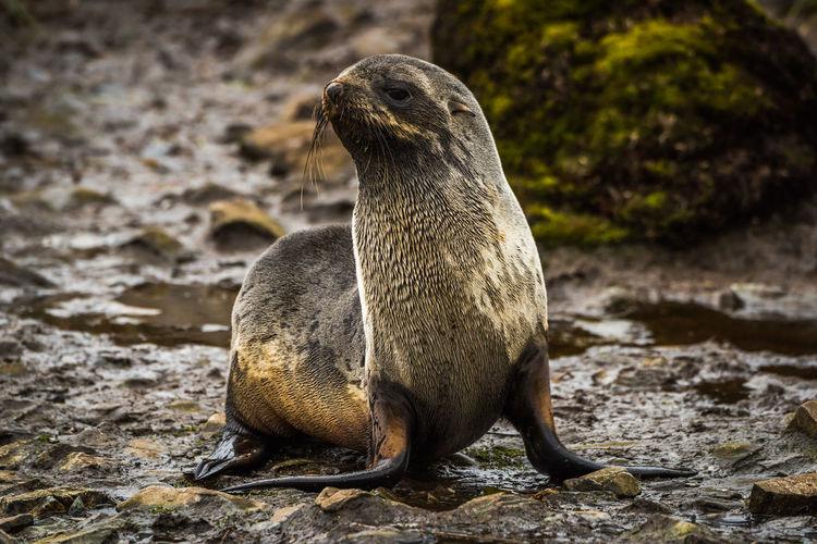 Seal resting in stream