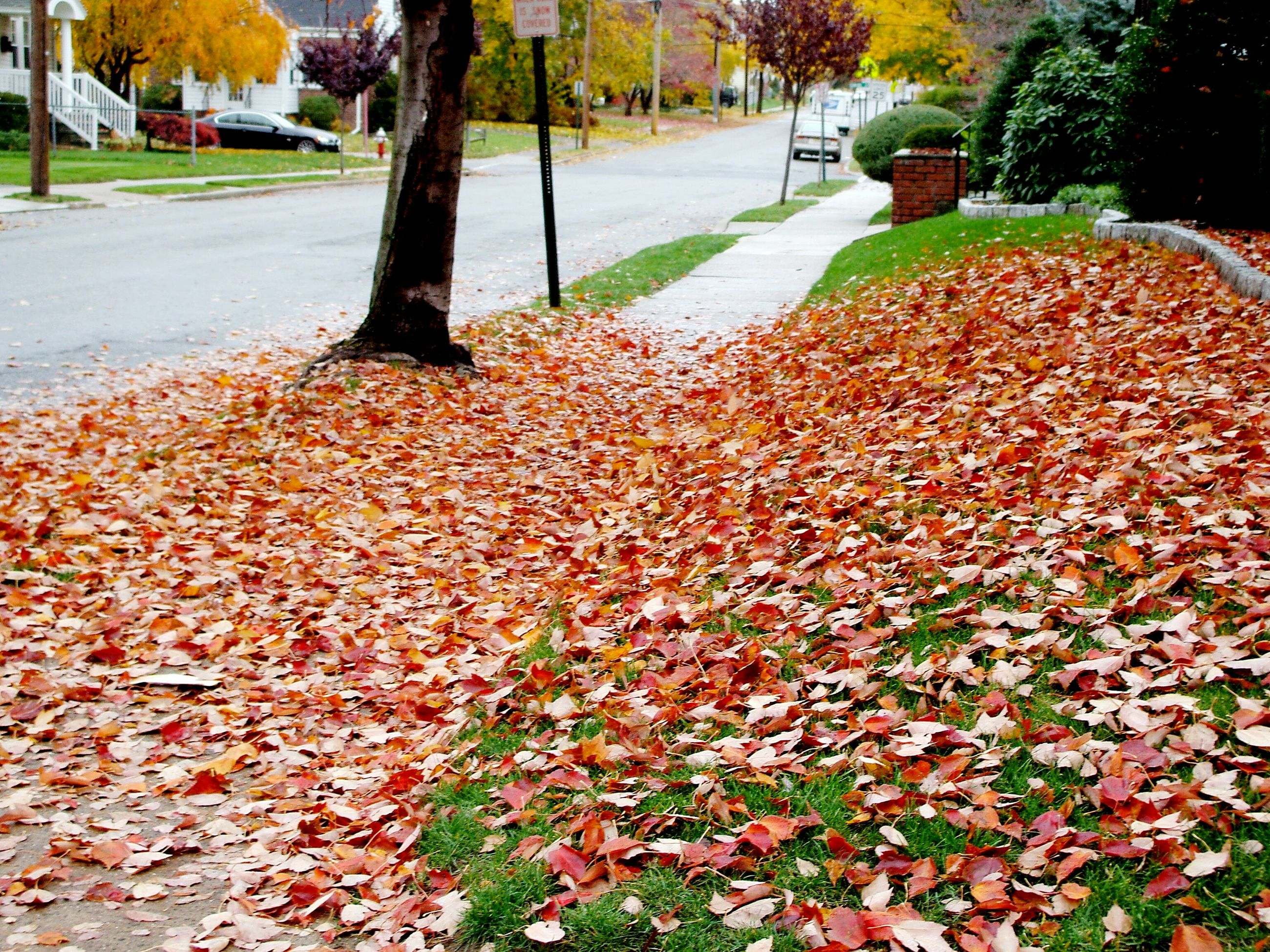 autumn, change, season, street, leaf, transportation, tree, road, orange color, fallen, building exterior, the way forward, car, leaves, city, outdoors, nature, day, asphalt, surface level