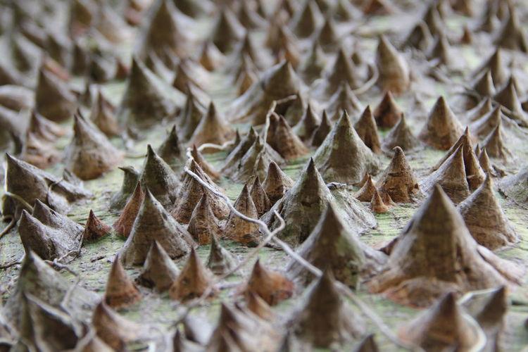 Full frame shot of thorns on tree