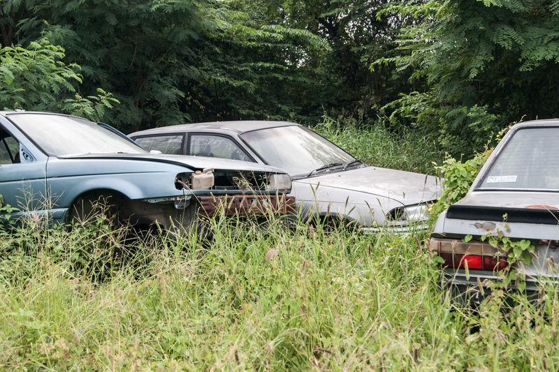 Car Day Grass