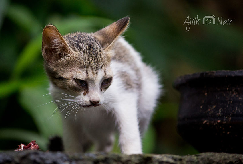 Cat Animal Domestic Cat One Animal Whisker Animal Hair Ear Feline Mammal Eye Pets Cute Paw Beauty Closing Outdoors No People Portrait Nature Domestic Animals Day Cat♡ Cat Lovers Cats Of EyeEm Catsagram