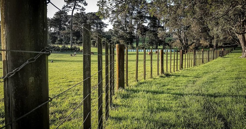 Tree Field Sky Grass Green Color Chainlink Fence Love Lock Cultivated Land Barbed Wire Chainlink Rice Paddy Wire Mesh Fence Ear Of Wheat Farmland Oilseed Rape Razor Wire Plantation Farm Agricultural Field Padlock Security Plough Crop  Plowed Field
