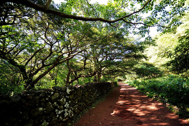Plant Tree Nature Growth Land Day Beauty In Nature Tranquility Outdoors Sunlight Trail Forest JEJU ISLAND  Park Bijarim