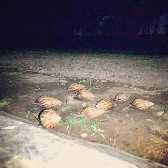 Nature Photography Nature Lanscape Nature On Your Doorstep Unlikely HeroesNight BrotherhoodMasyaallah the migration of snail, their brotherhood is more than me. they move away when i sleeping. thats because in the night time, they will save to across the street. you are lucky to be an human!